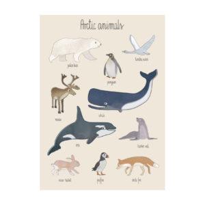sebra poster sealife